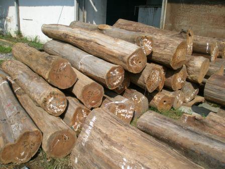 obat pengawetan kayu jati