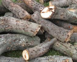 harga obat pengawetan kayu