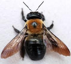 kumbang perusak