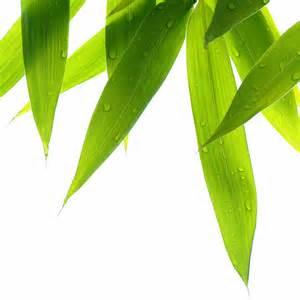 pengawetan-bambu