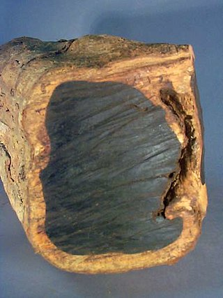 kayu eboni